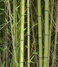 green fashion, bamboo